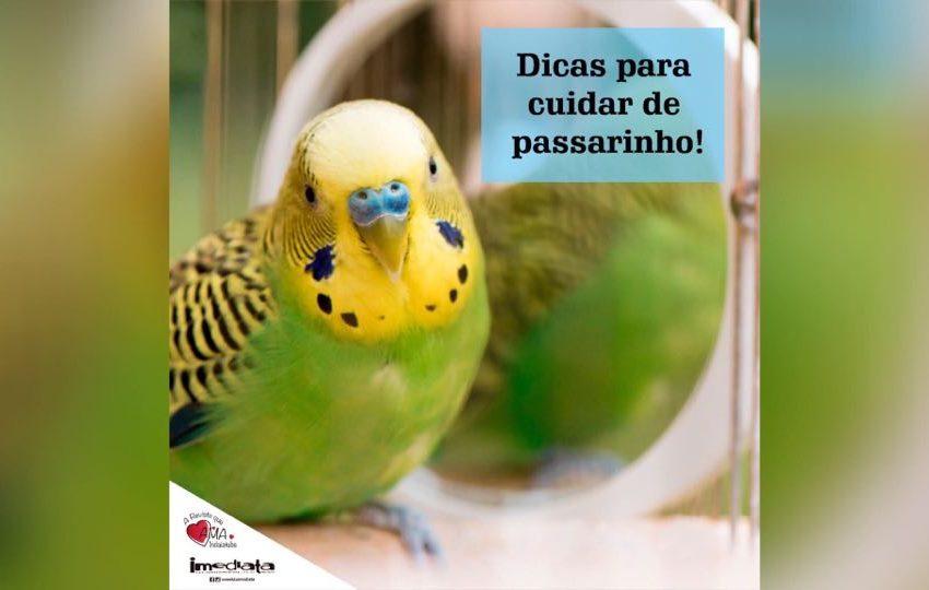 Dicas para cuidar de passarinhos